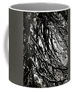 Coffee Mug featuring the photograph Snow On Pine Boughs by Timothy Bulone