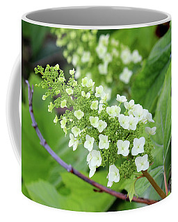 Snow Queen Hydrangea Coffee Mug
