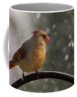 Coffee Mug featuring the photograph Snow Showers Female Northern Cardinal by Terry DeLuco