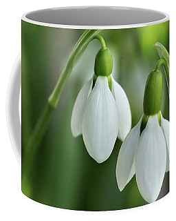 Coffee Mug featuring the photograph Snowdrops by Mary Jo Allen
