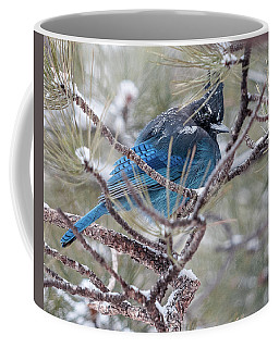 Snowy Bluejay  Coffee Mug
