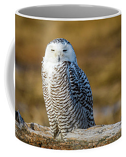 Coffee Mug featuring the photograph Snowy On Log by Michael Hubley