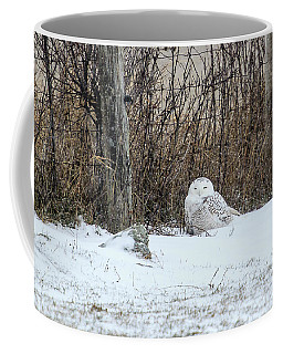 Coffee Mug featuring the photograph Snowy Owl 3 by Gary Hall