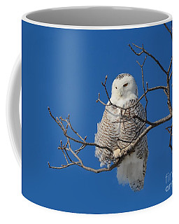 Snowy Owl 7 Coffee Mug