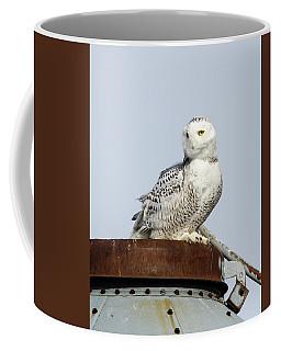 Snowy Owl II Coffee Mug