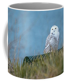 Snowy Owl On A Park Bench Coffee Mug