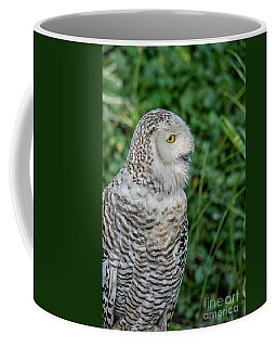 Coffee Mug featuring the photograph Snowy Owl by Patricia Hofmeester
