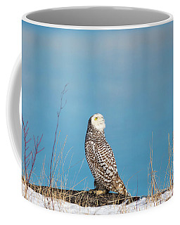 Coffee Mug featuring the photograph Snowy Watching A Plane by Brian Hale