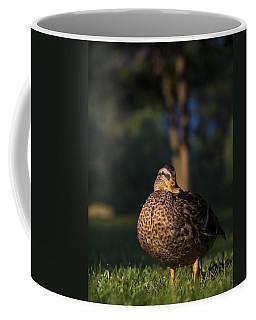 Coffee Mug featuring the photograph Soak Up The Sun by Mark Papke