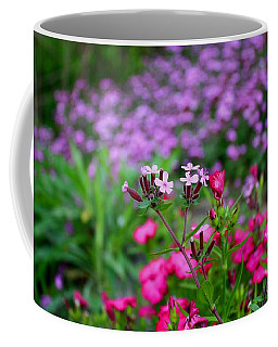 Coffee Mug featuring the photograph Soapwort And Pinks by Kathryn Meyer