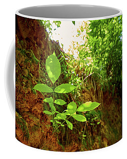Coffee Mug featuring the photograph Soft Simplicity by Tgchan