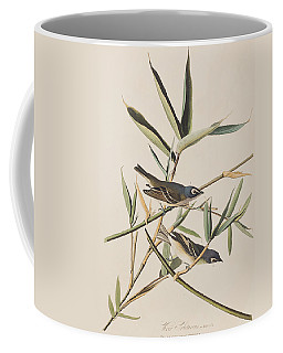 Solitary Flycatcher Or Vireo Coffee Mug