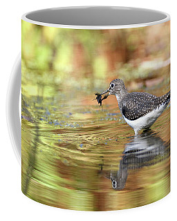 Solitary Sandpiper With Belostomatide Coffee Mug