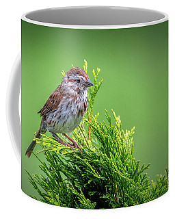 Song Sparrow Perched - Melospiza Melodia Coffee Mug