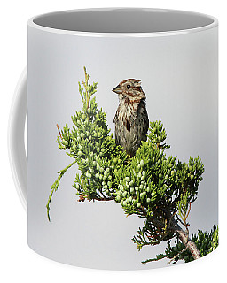 Song Sparrow Port Jefferson New York Coffee Mug