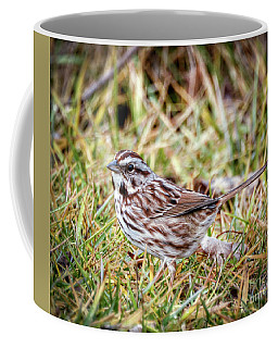 Coffee Mug featuring the photograph Song Sparrow Sweetie by Kerri Farley