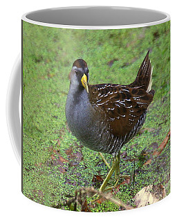 Sora On Watch Coffee Mug by Myrna Bradshaw