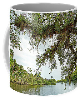Coffee Mug featuring the photograph South Fork Of The Saint Lucie River by Larry Nieland