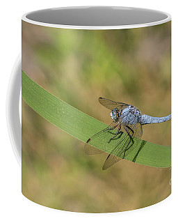 Southern Skimmer Male - Orthetrum Brunneum Coffee Mug