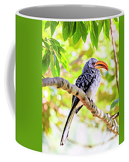 Coffee Mug featuring the photograph Southern Yellow Billed Hornbill by Alexey Stiop