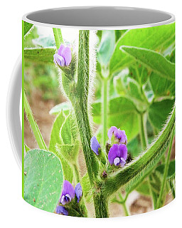 Soybean  Coffee Mug