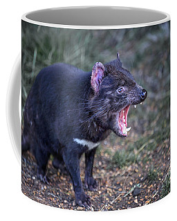 Tasmanian Devils Coffee Mugs Fine Art America