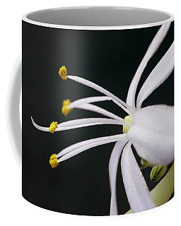 Spider Plant Flower Coffee Mug