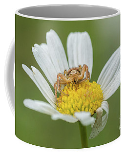 Spider Waits For It's Prey Coffee Mug
