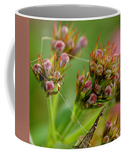 Spider Web Coffee Mug