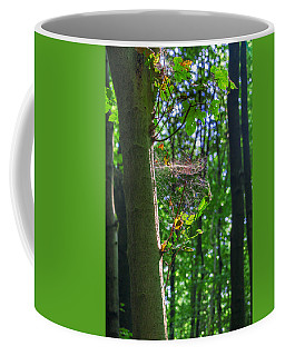 Spider Web In A Forest Coffee Mug