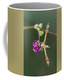 Spiderling Plume Moth On Wineflower Coffee Mug
