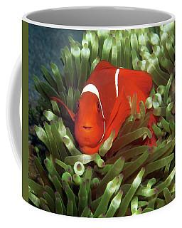 Spinecheek Anemonefish, Indonesia 2 Coffee Mug