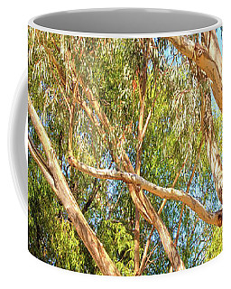 Spot The Koala, Yanchep National Park Coffee Mug by Dave Catley