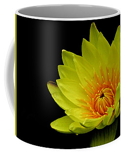 Spotlight On Lily Coffee Mug