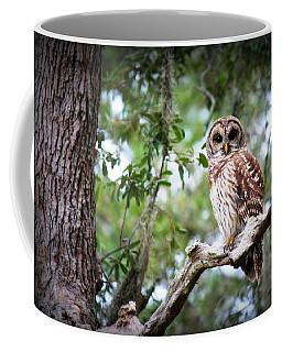 Spotted Owl II Coffee Mug