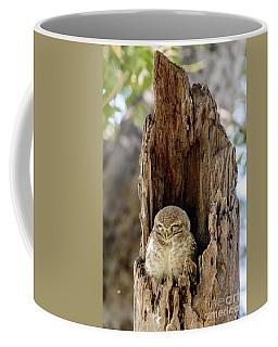 Spotted Owlet Coffee Mug