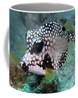 Coffee Mug featuring the photograph Spotted Trunkfsh by Jean Noren