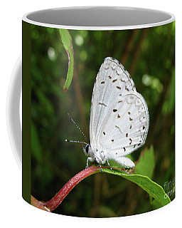 Spring Azure Butterfly Coffee Mug by Donna Brown