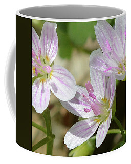 Spring Beauty 3 Coffee Mug