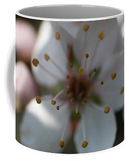 Spring Beauty Macro 1 Coffee Mug