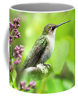 Spring Beauty Ruby Throat Hummingbird Coffee Mug