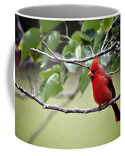 Coffee Mug featuring the photograph Spring Cardinal by Lana Trussell