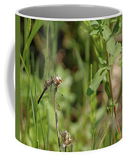 Coffee Mug featuring the photograph Spring Dragonfly by LeeAnn McLaneGoetz McLaneGoetzStudioLLCcom