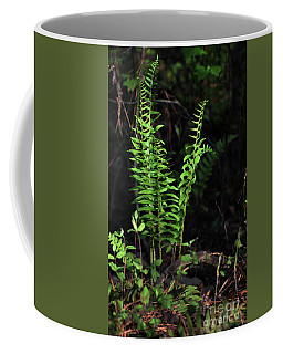 Coffee Mug featuring the photograph Spring Ferns by Skip Willits