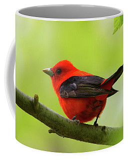 Spring Flame - Scarlet Tanager Coffee Mug