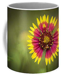 Spring Indian Blanket Coffee Mug