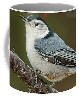 Coffee Mug featuring the photograph Spring Nuthatch 2017 by Lara Ellis