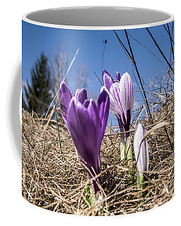 Coffee Mug featuring the photograph Spring On Bule by Nick Mares
