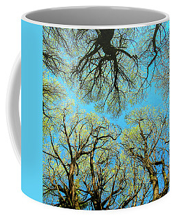Coffee Mug featuring the photograph Spring Trees by Vladimir Kholostykh