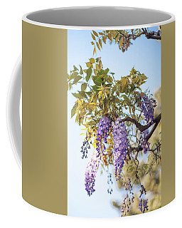 Coffee Mug featuring the photograph Spring Wisteria Bloom by Jenny Rainbow